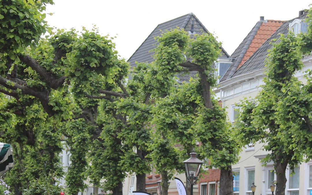 Vervangen negen Lindebomen in de Voorstraat